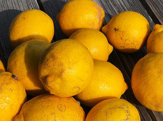 山北 レモン